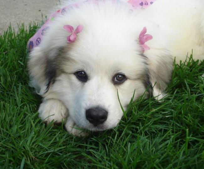 Princess Missy