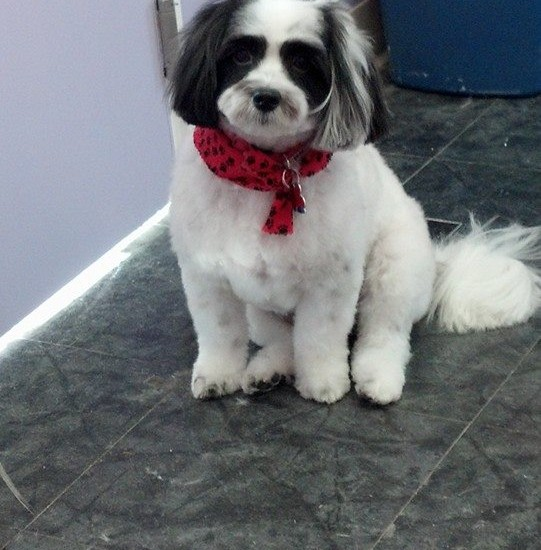 Prince Fluffy