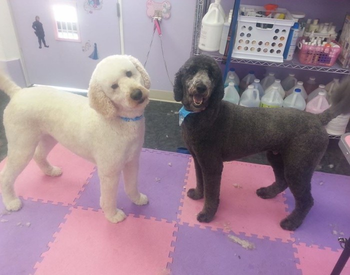 Pluto and Archie